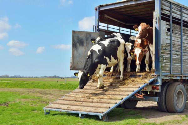 bienestar animal en el transporte malaga